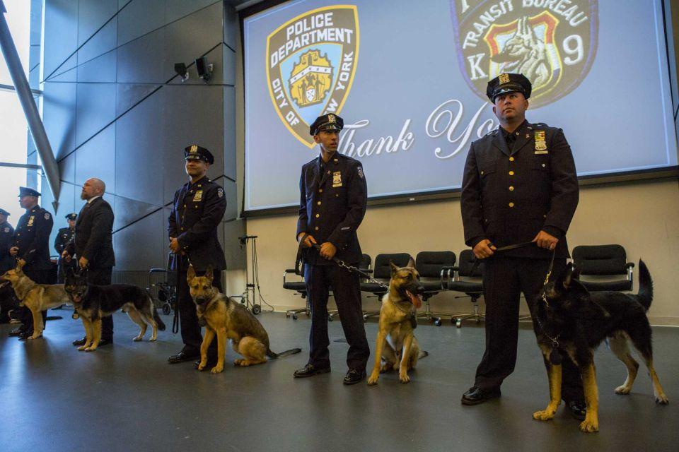 MTA Dogs AM New York Elmont Excelsior 1