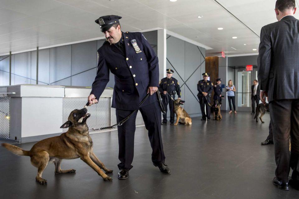 MTA Dogs AM New York Elmont Excelsior 3